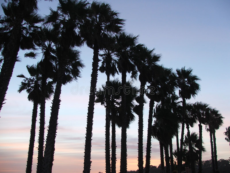 Download Palm trees at sunset stock photo. Image of palm, trees - 161660