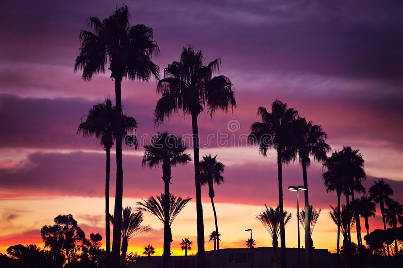 Download Palm trees and sunset stock image. Image of beautiful - 26615641