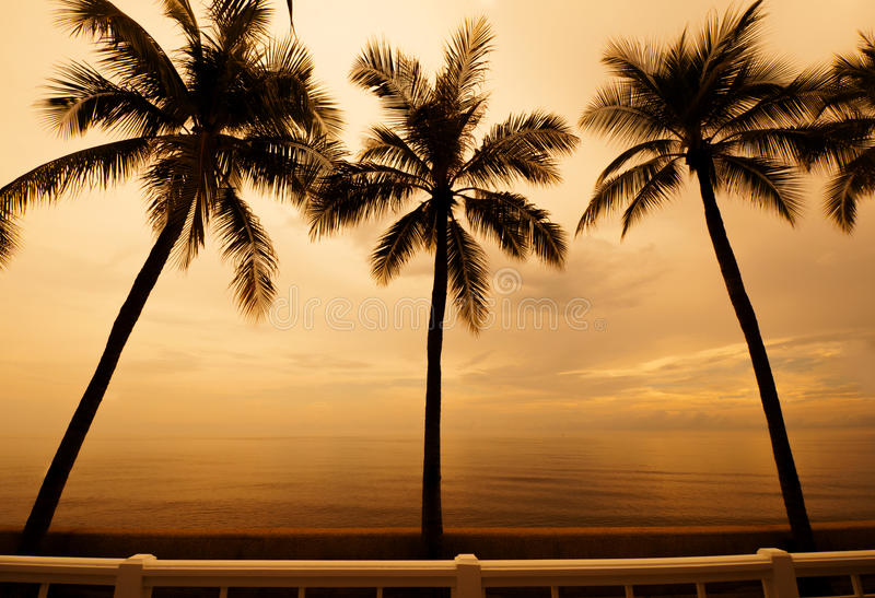 Download Palm trees  sunset stock photo. Image of bounty, colorful - 27993174