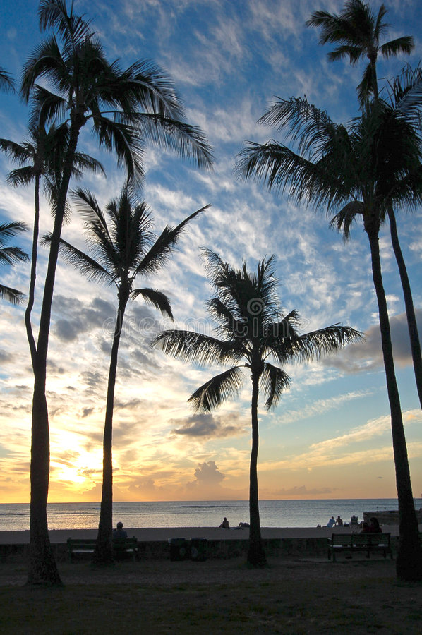 Download Palm Trees at Sunset stock image. Image of luxury, nature - 6988427