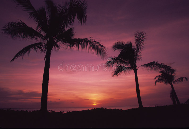 Palm Trees In Sunset Royalty Free Stock Photo