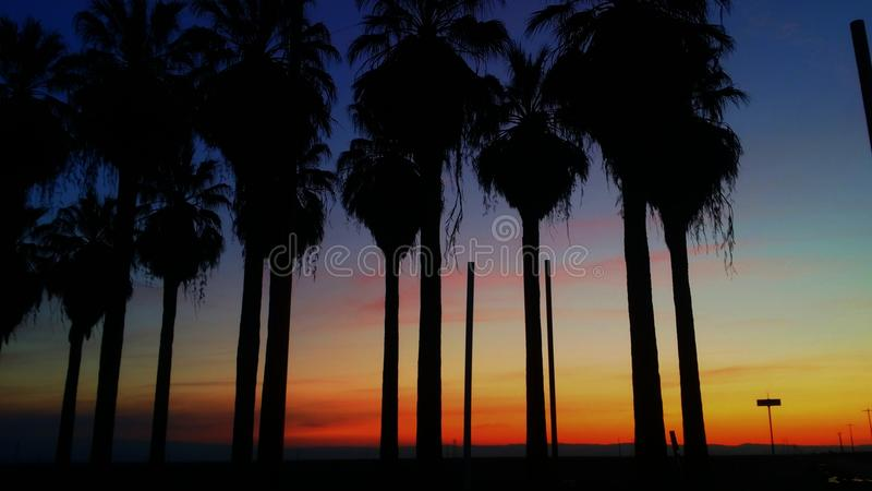 Palm trees/Sunset stock image