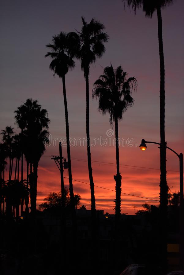 Palm trees at sunset in LA stock images