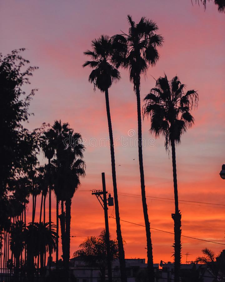 Palm trees at sunset in Los Angeles stock photography