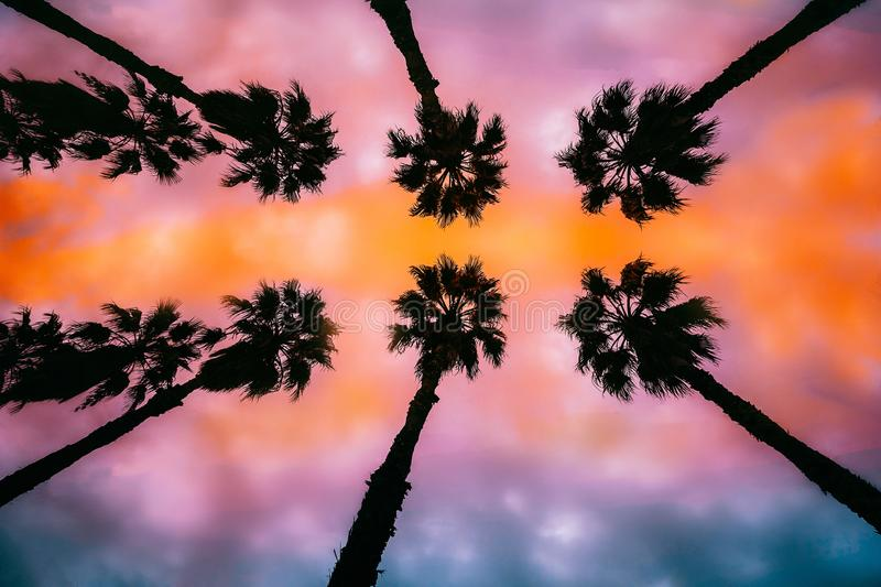 Palm trees at sunset. Silhouettes of palm trees at sunset stock photos