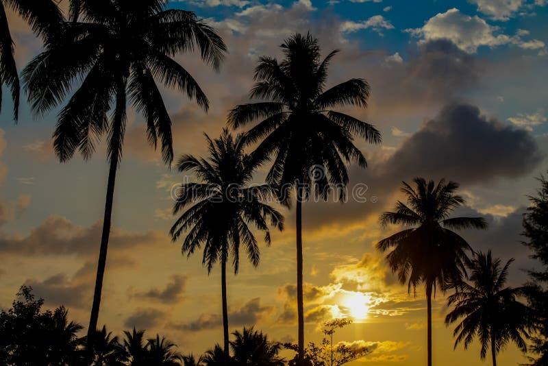 Palm trees sunset silhouettes on the beach. Palm trees sunset silhouette at tropical sea resort. beautiful luxury sea beach resort in Tropics, Thailand stock photo