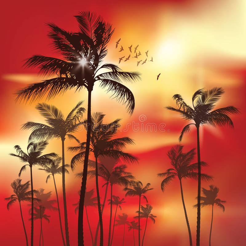 Palm trees at sunset. vector illustration