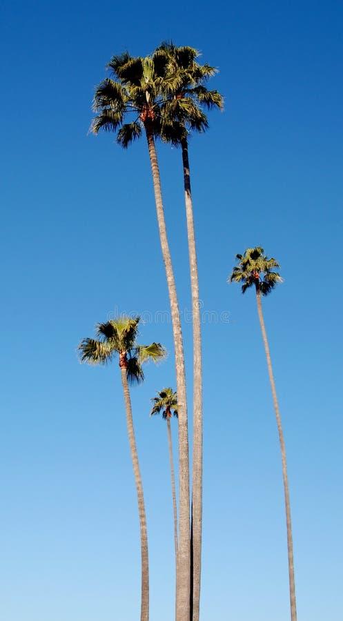 Palm Trees and Sunshine stock photos