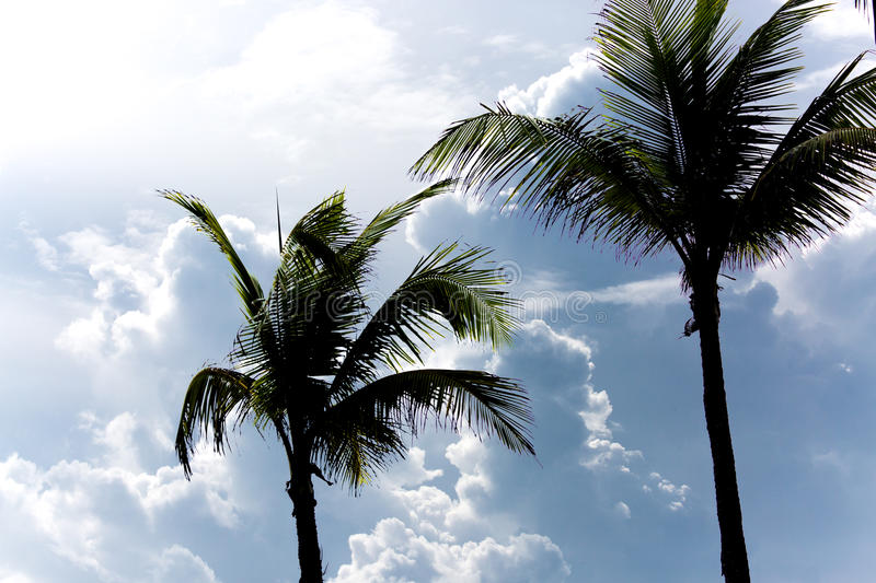 Download Palm Trees And Thick Clouds Stock Photo - Image: 74569954