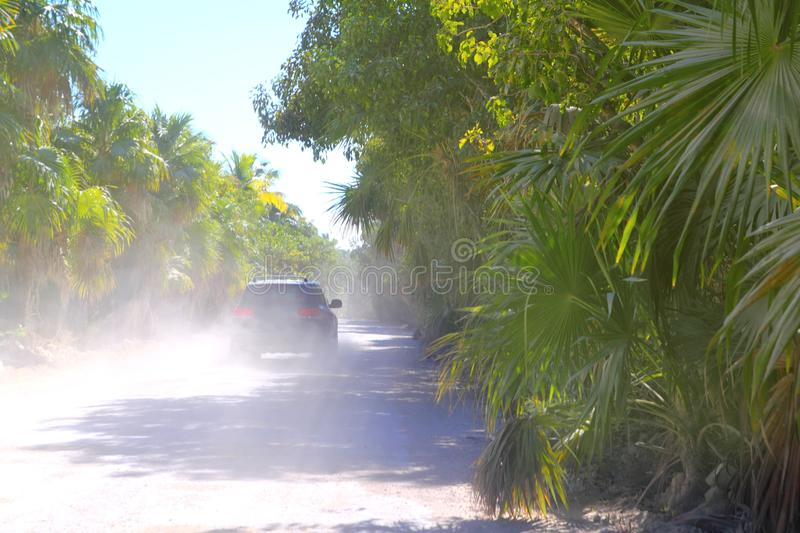 Palm trees track road car sand dust foggy royalty free stock image