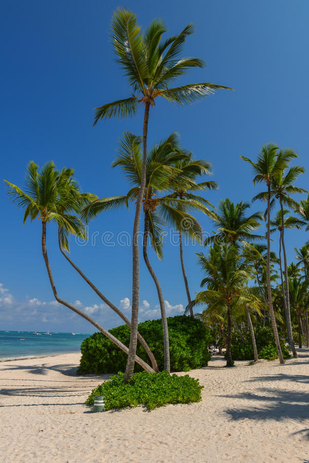 Download Palm Trees On The Tropical Beach Stock Photo - Image: 28474966