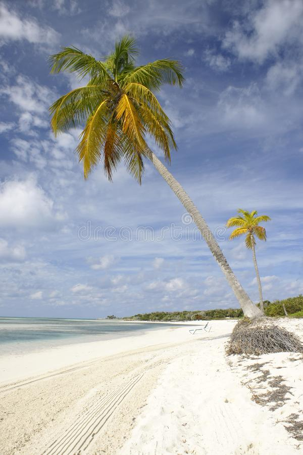 Palm trees on tropical beach royalty free stock image