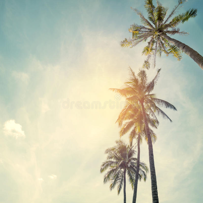 Palm trees at tropical beach coast royalty free stock photo