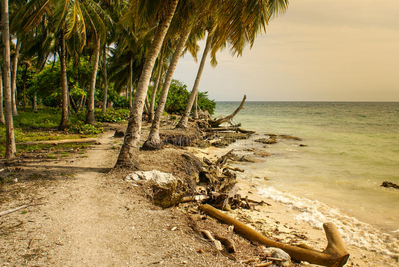 Download Palm Trees On Tropical Beach In The Colombia,America Sur Stock Image - Image: 37075137