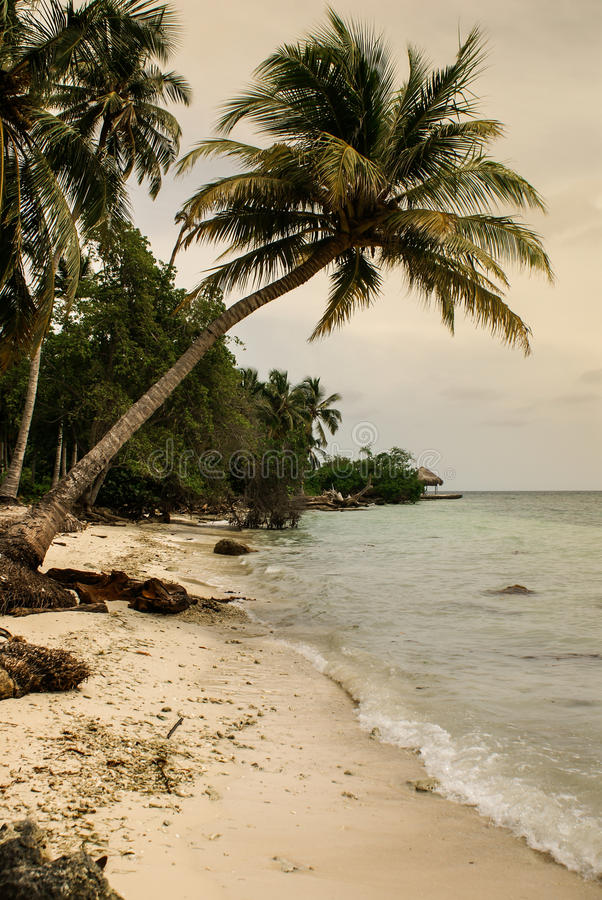 Download Palm Trees On Tropical Beach In The Colombia,America Sur Stock Image - Image: 37076231