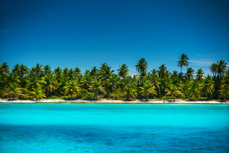 Palm trees on the tropical beach island Saona, Dominican Republic stock photo
