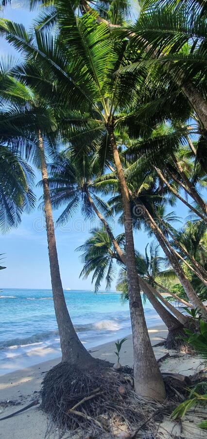 Palm trees on a tropical beach stock images