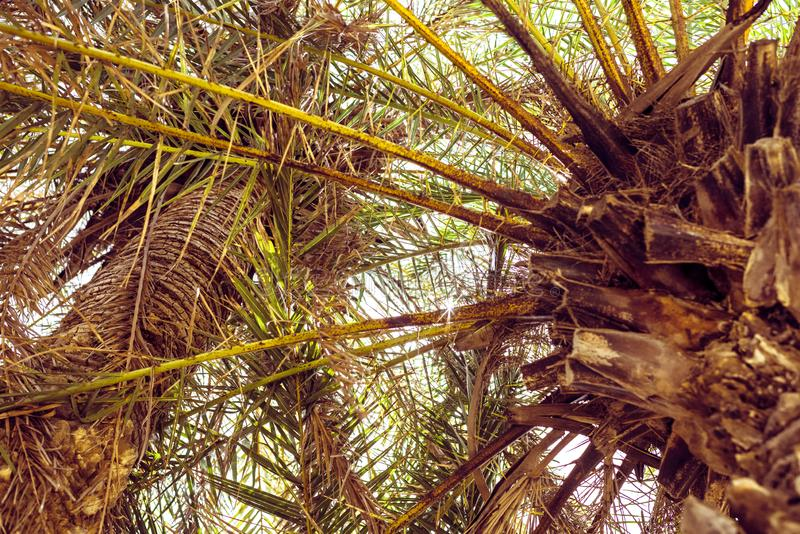 Palm trees at tropical beach, vintage toned and film stylized royalty free stock images