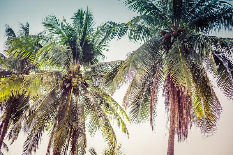 Palm trees at tropical coast, vintage toned and film stylized. royalty free stock images