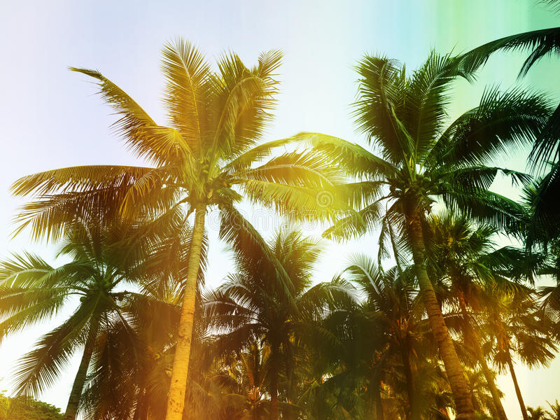 Palm trees at tropical outdoor, vintag style royalty free stock photo
