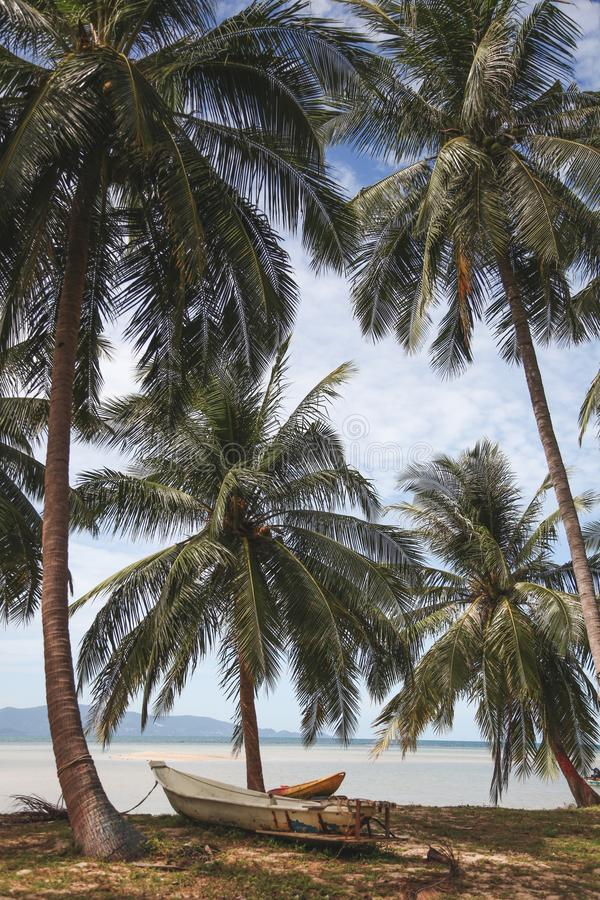 Palm trees at tropical seashore with boat standing. On ground royalty free stock photography