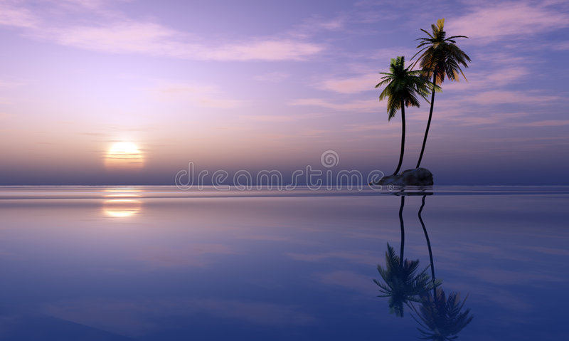 Palm trees and tropical sunset stock photos