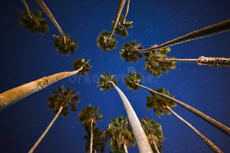 Palm Trees Under Blue Skies With Stars at Nigh Time royalty free stock image