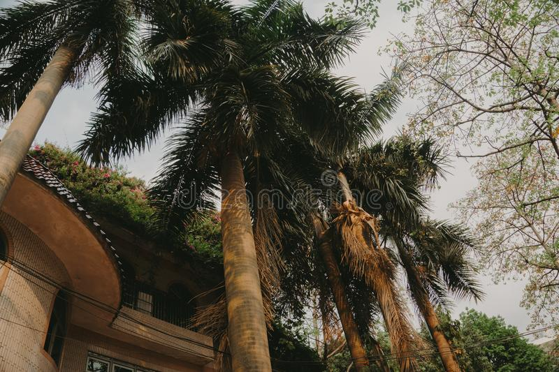 Palm Trees Under Gray Skies stock images
