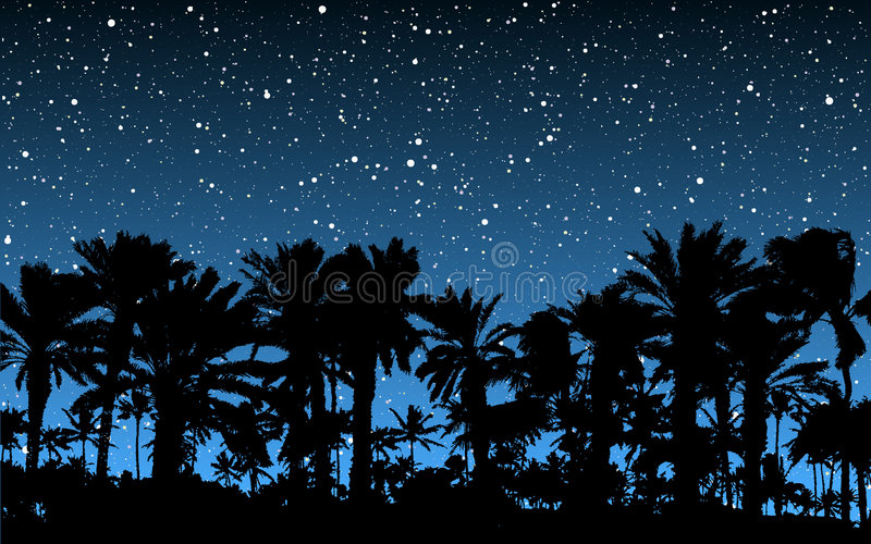Palm Trees Under Stars Stock Image