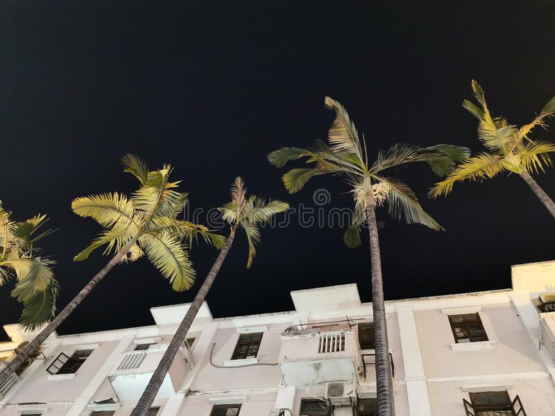 Palm Trees undershot in China royalty free stock images
