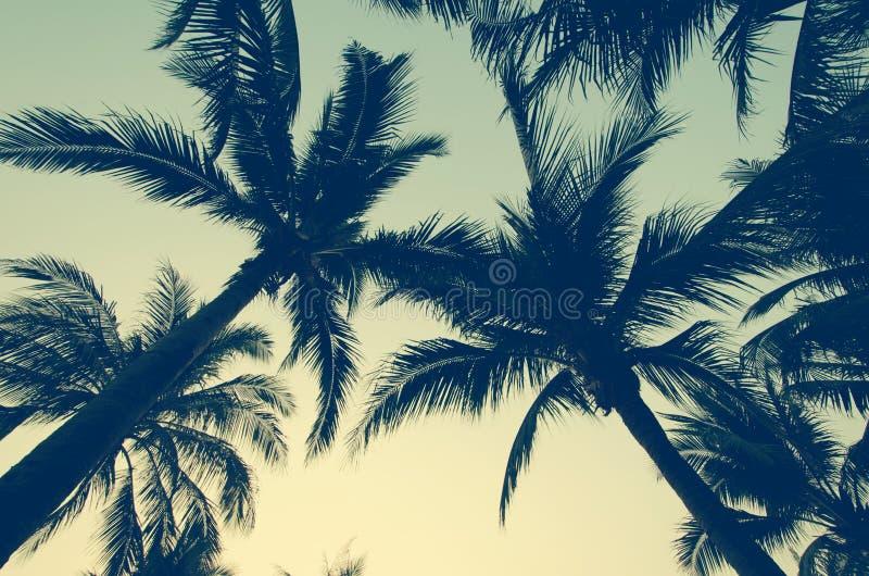Palm trees vintage royalty free stock photo
