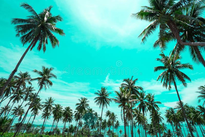 Palm trees vintage toned , Fashion, travel, summer, vacation and tropical beach . Creative made of green tree leaves. royalty free stock photography