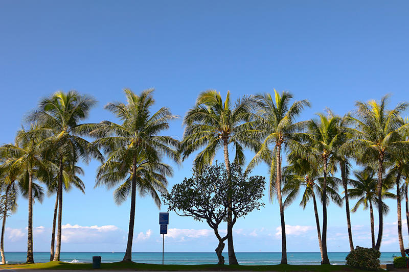 Download Palm Trees At Waikiki Beach, Hawaii Stock Photo - Image: 19097308