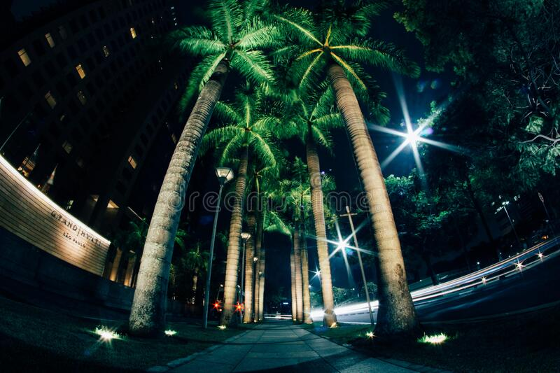 Palm trees on walkway royalty free stock images