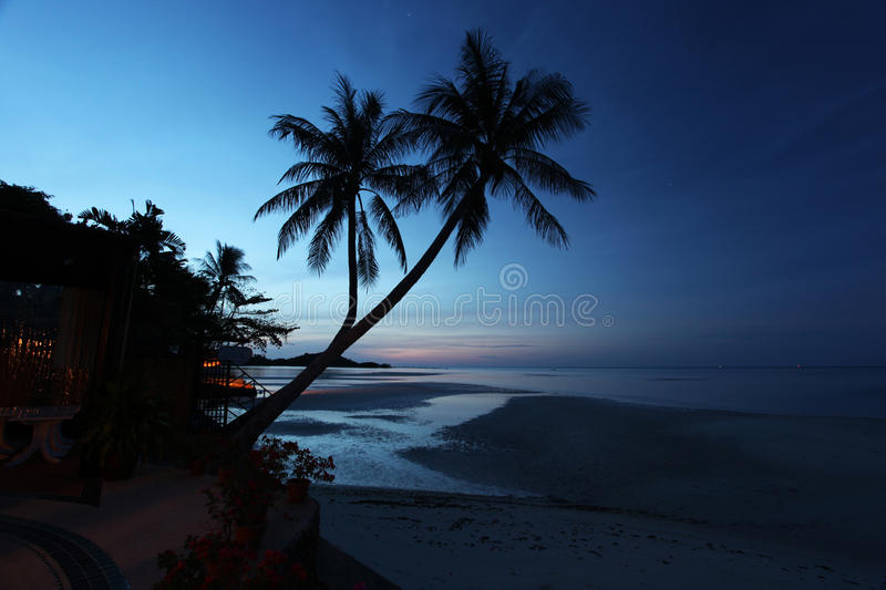 Download Palm trees stock image. Image of palm, tropical, nature - 36693429