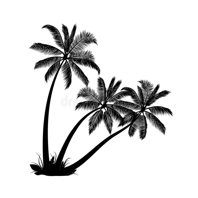 Palm trees. On white background vector illustration