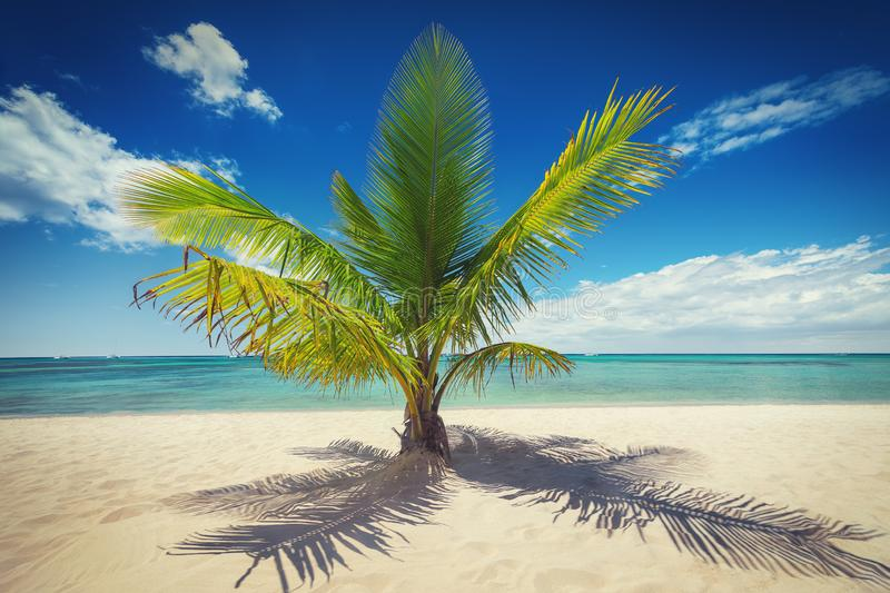 Palm trees on white sandy beach in Caribbean sea, Saona island. Dominican Republic royalty free stock photography