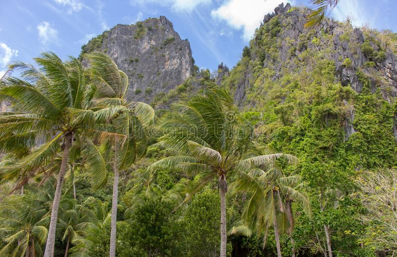 Palm trees in the wind against black rocky mountains. Philippines island nature. Tropical landscape. Palm trees in the wind against black rocky mountains royalty free stock images
