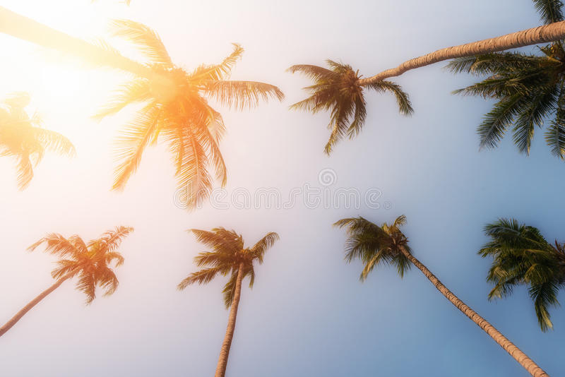 Palm trees and yellow sun in a sky royalty free stock photography
