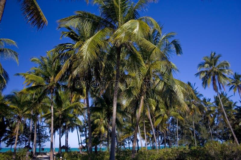Palm trees on Zanzibar island royalty free stock photography