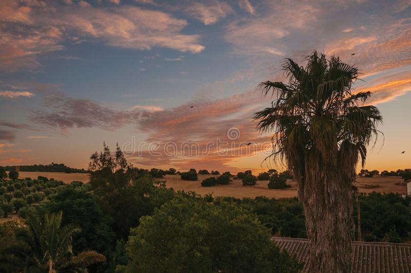 Palm treetops and multicolored sky in a farm. Countryside landscape with leafy palm treetops at sunset dusk and gorgeous multicolored sky in a farmstead near stock photography