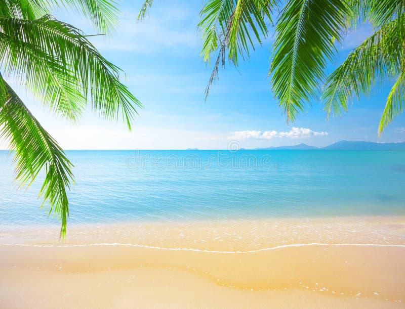 Palm and tropical beach stock photos