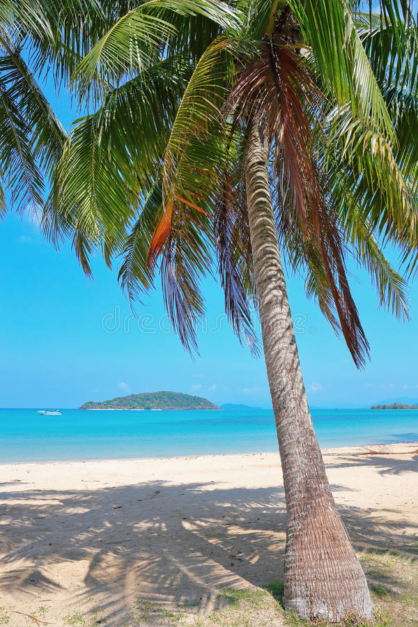 Download Palm on a tropical beach stock photo. Image of beautiful - 52777560