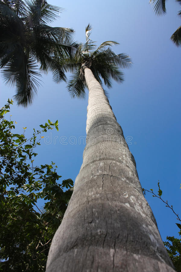 Palm. Tropical forest. Tayrona Park. Colombia royalty free stock photo