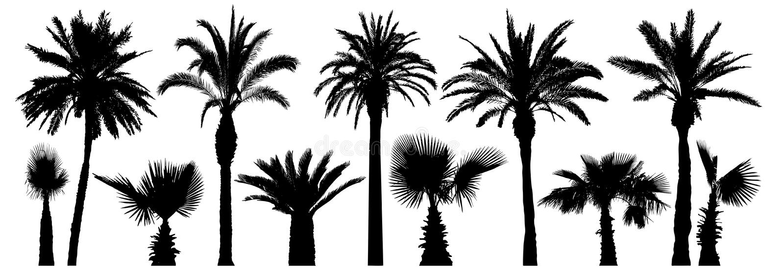 Palm tropical trees. Silhouette vector set. Isolated stock illustration