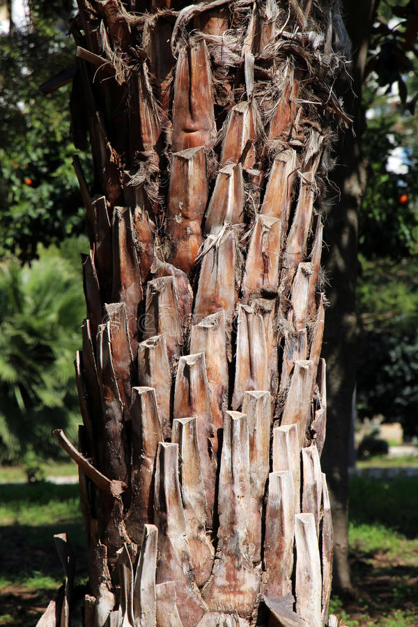Download Palm trunk stock image. Image of garden, green, vertical - 38995249