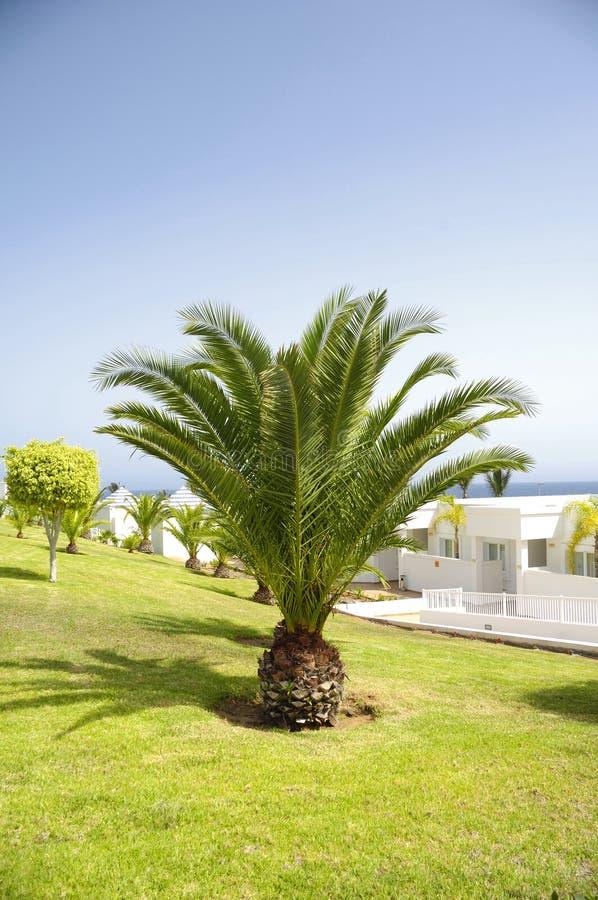 Palm in tuin royalty-vrije stock foto