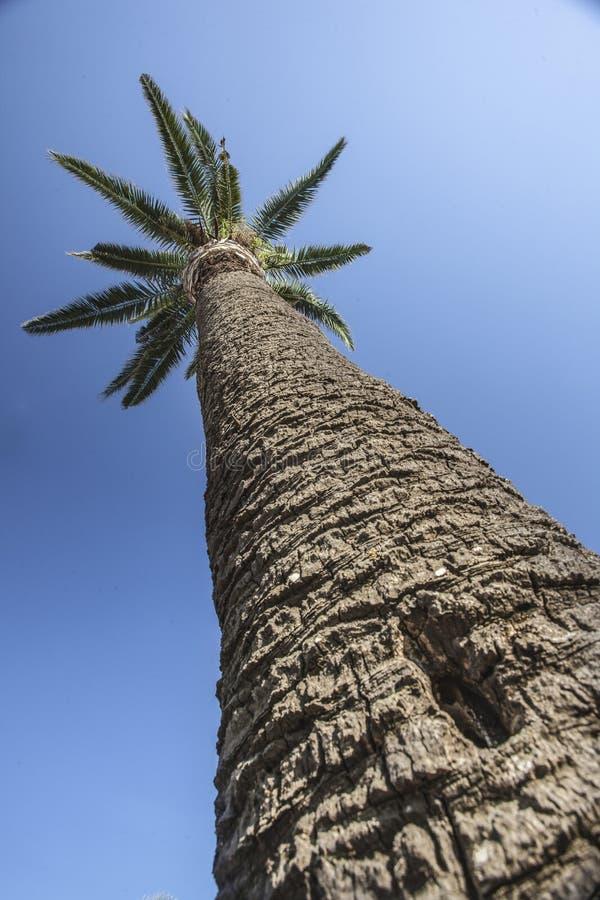 Palm van boven 2 royalty-vrije stock foto