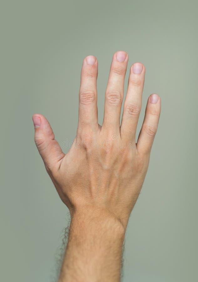 Palm van mannelijke hand royalty-vrije stock fotografie