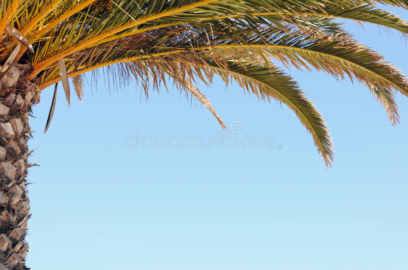 Download Palm stock photo. Image of ocean, beach, leaf, sunny - 34930666